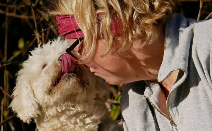 Die überragende Kommunikationskompetenz unsere Hunde