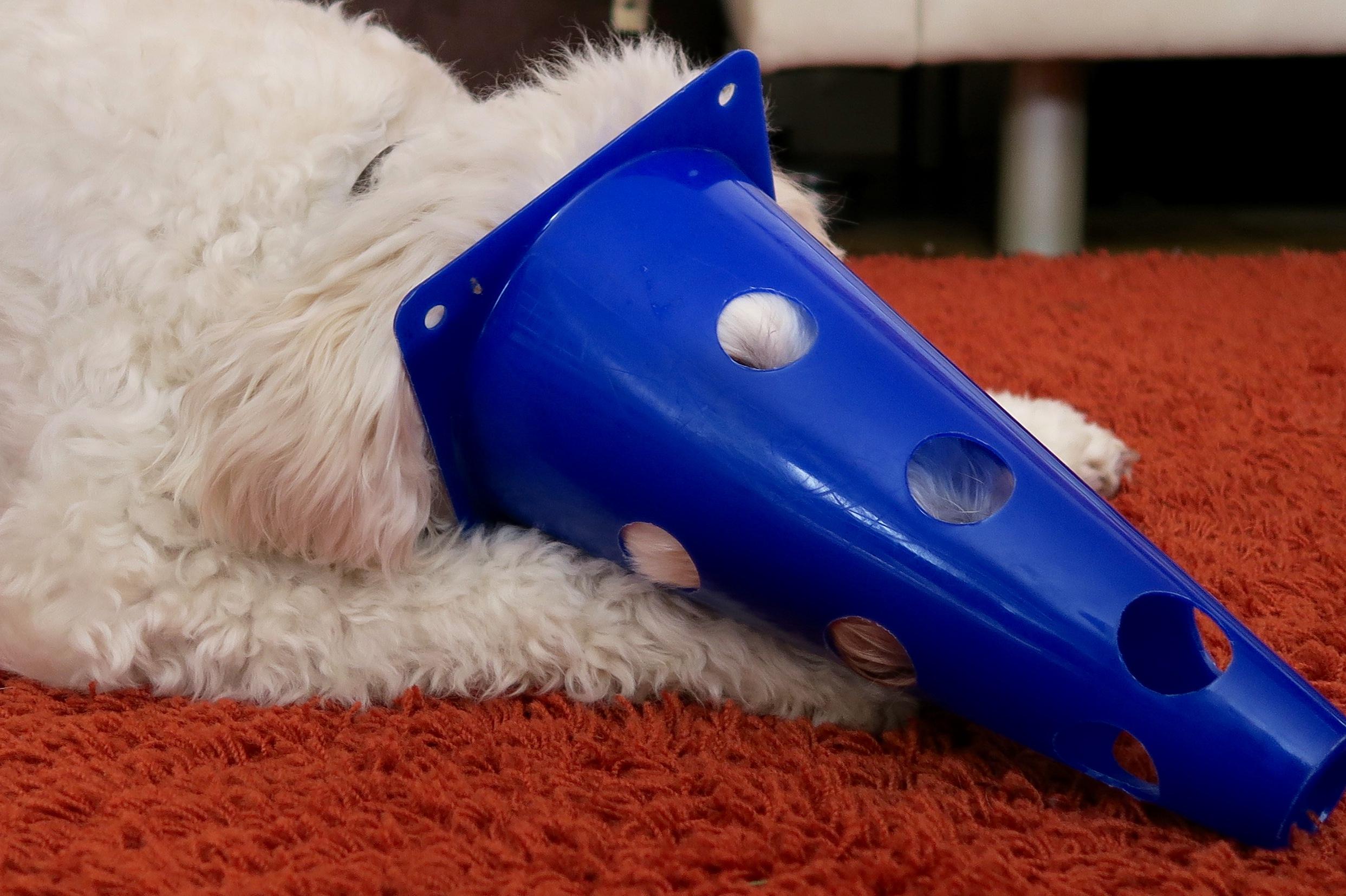 Trickdogging – Versteck Dich