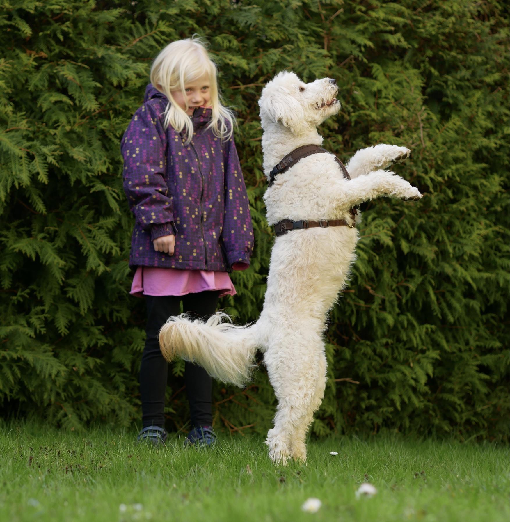 Trickdogging –  Hinterhandstand