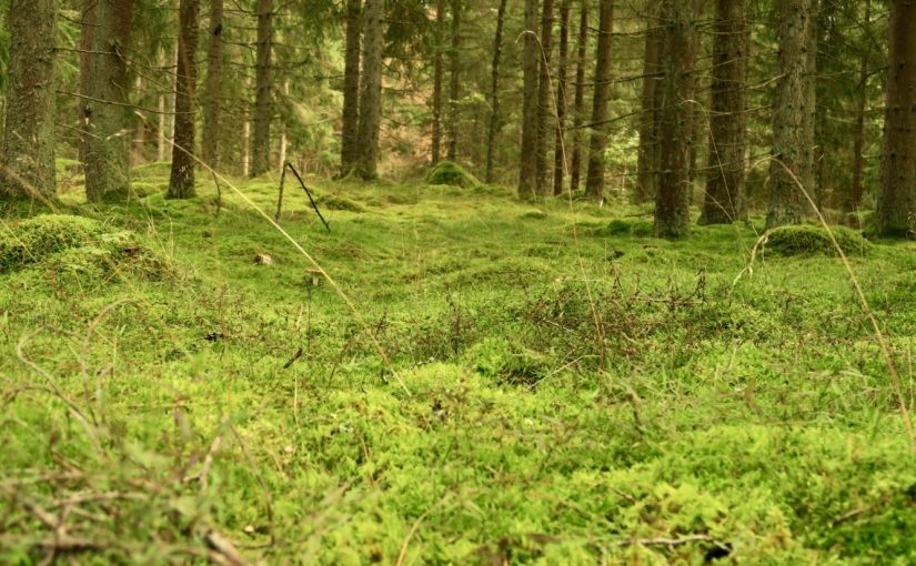 Zauber der Wälder Smålands