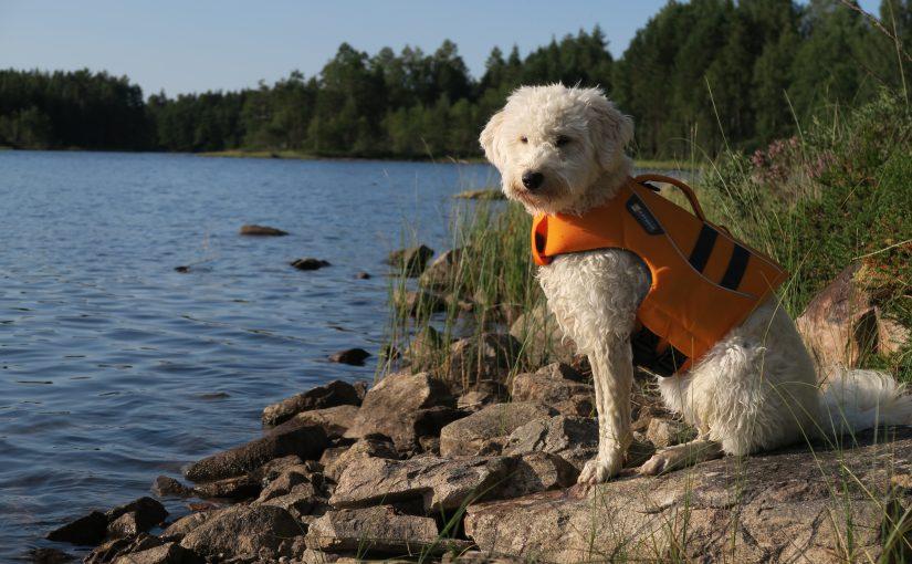 Unterwegs im Nationalpark Glaskogen/Värmland (Schweden)