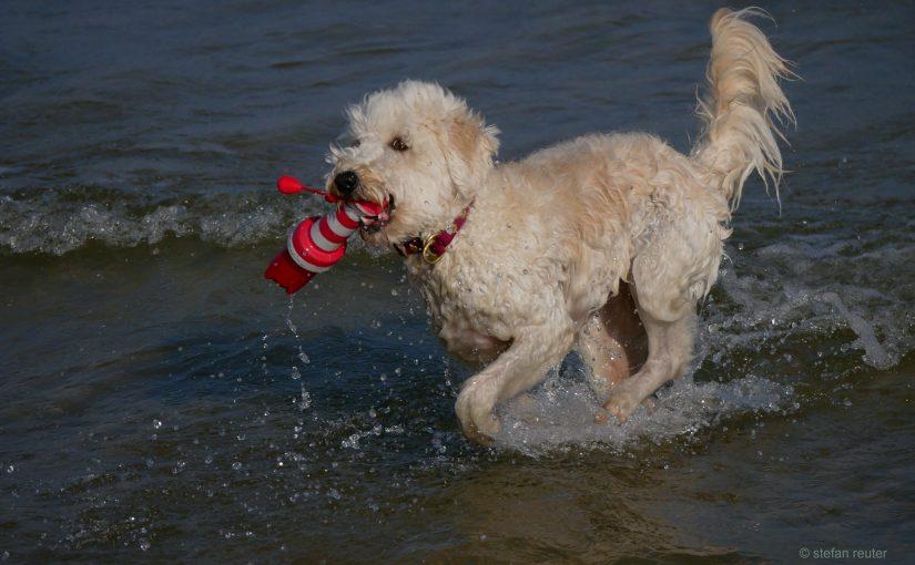 Motivierendes Feedback zum Hunde-Einmaleins