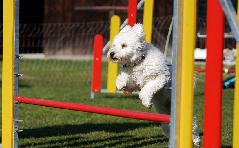 Agility for fun – September